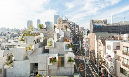 Ilyen házat tervez egy fákért rajongó építész
