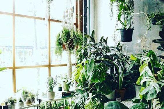 Növényt a lakásba? Nooormális?