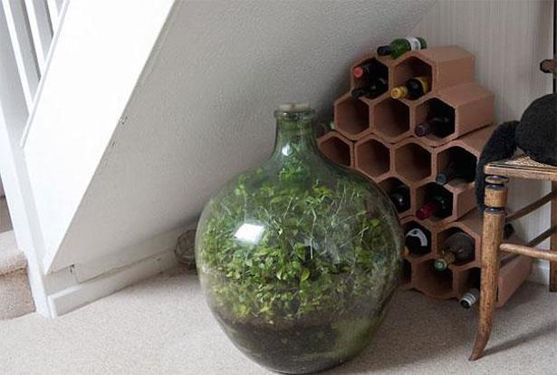 40 éve burjánzik ez a növény egy lezárt üvegben