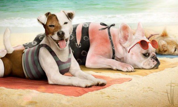 A kutyára is kell naptej, ha strandolni mentek. Hoppá!