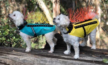 Mi ez az elképesztő ruha ezeken a kutyákon?!