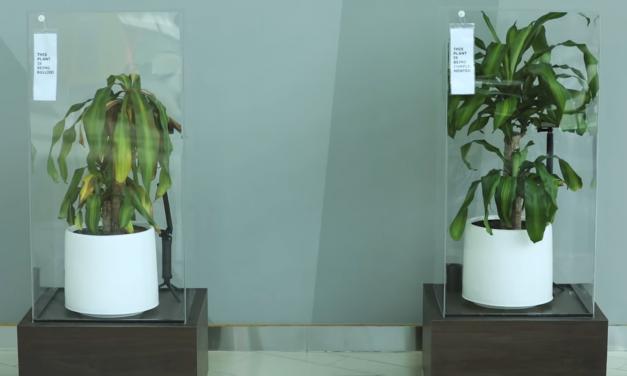 Szobanövényeken mutatta be az IKEA, milyen károkat okozhat az iskolai zaklatás
