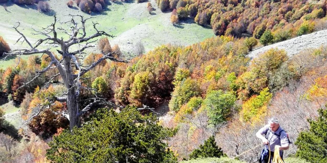 1230 éves Európa legöregebb fája