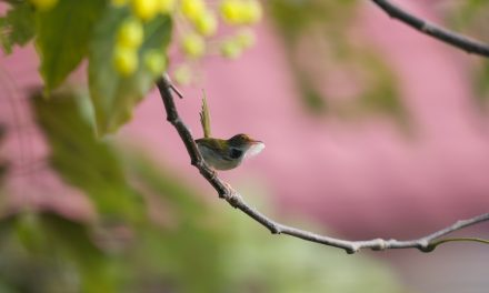 Egy madár, aki ügyesebben varr, mint én