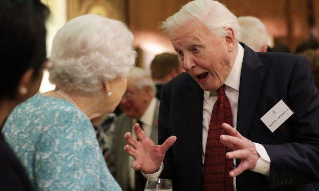 92 másodperces videóban 92 legszebb pillanatával köszöntötték a 92 éves Attenborough-t