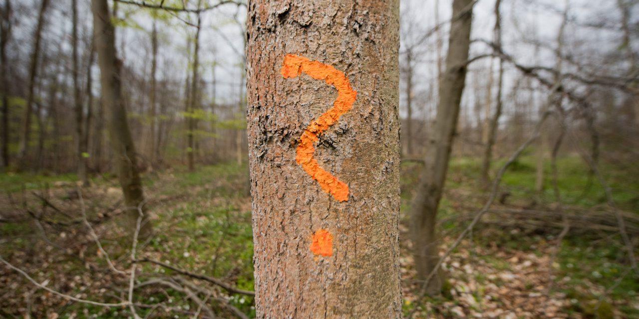Ez milyen fa? Azonosítsd be a legújabb magyar mobilos fahatározóval!
