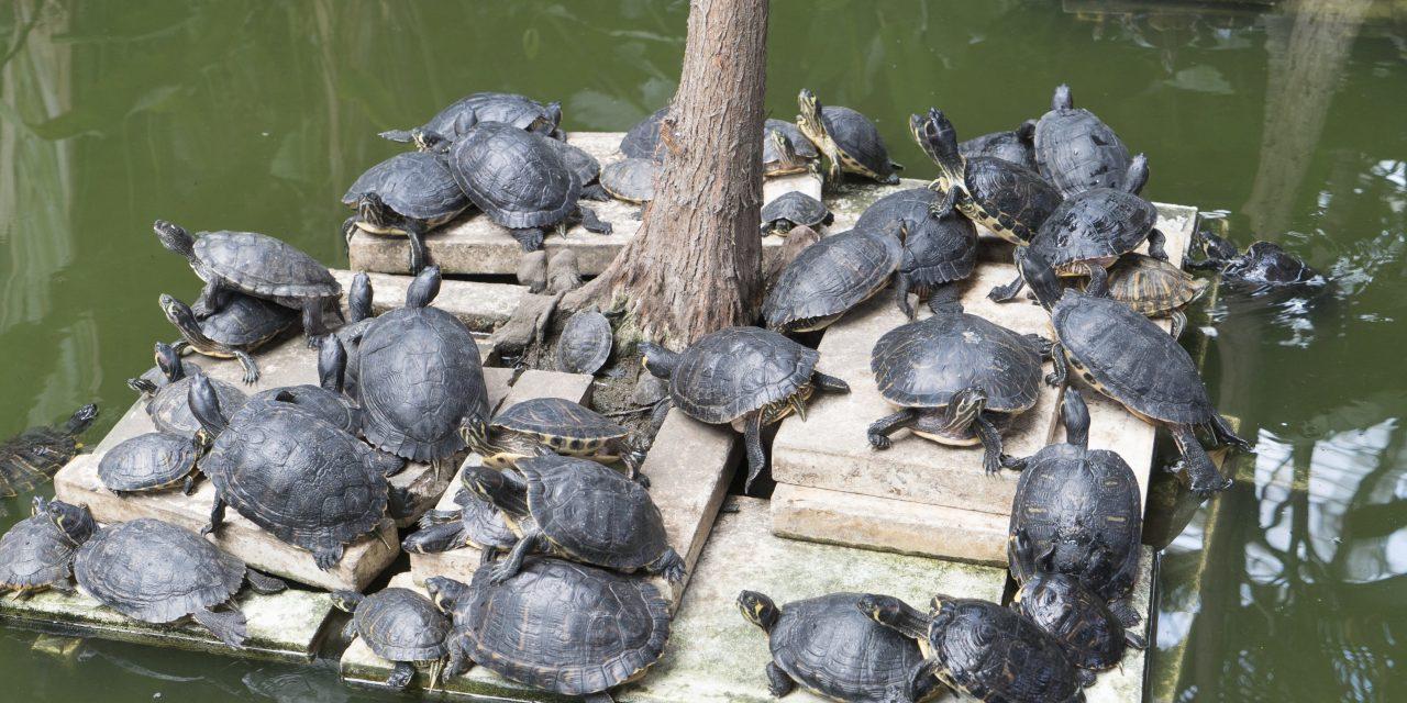 Új helyre telepítették a madridi Atocha pályaudvarra kidobált teknősöket
