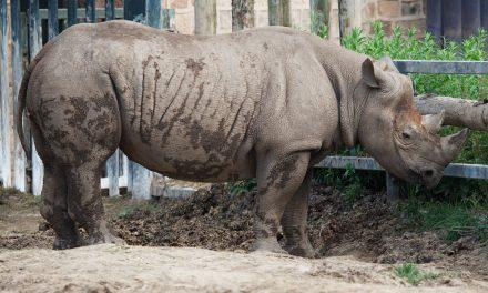 Vízerőmű terve veszélyezteti az orrszarvú otthonát Tanzániában