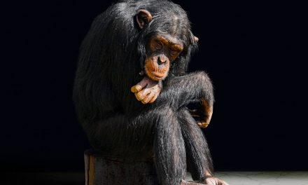 Rákot okozhat az emberi tevékenység a vadon élő állatoknál