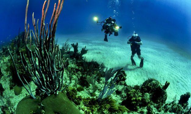 Japán legnagyobb korallzátonyának csak egy százaléka egészséges