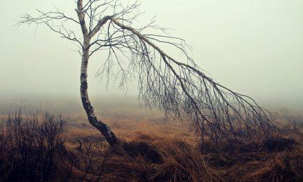 A növényzet felét feléltük, a vadállatok 83 százalékát elpusztítottuk
