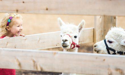 Megnyílt a Fővárosi Állatkert legújabb fejlesztése, a Holnemvolt Vár