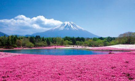 Rózsaszín lett a hegy, százezrek csodálják
