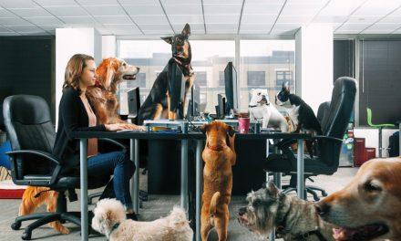 Jó vagy rossz a kutyabarát munkahely?
