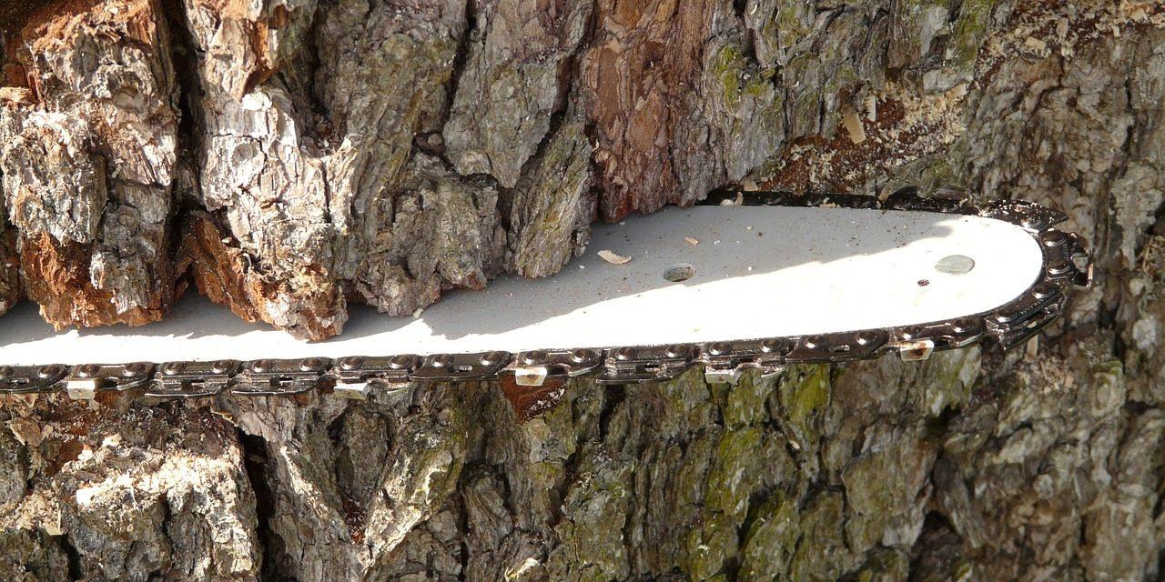 Több hektáron vágják ki a fákat a Balatonnál