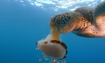 Mindenkinek jár egy jó spagetti, még a teknősbékáknak is
