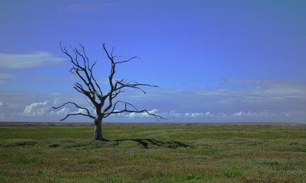A klímaváltozás hatásaira hívja fel a figyelmet egy új dokumentumfilm-sorozat
