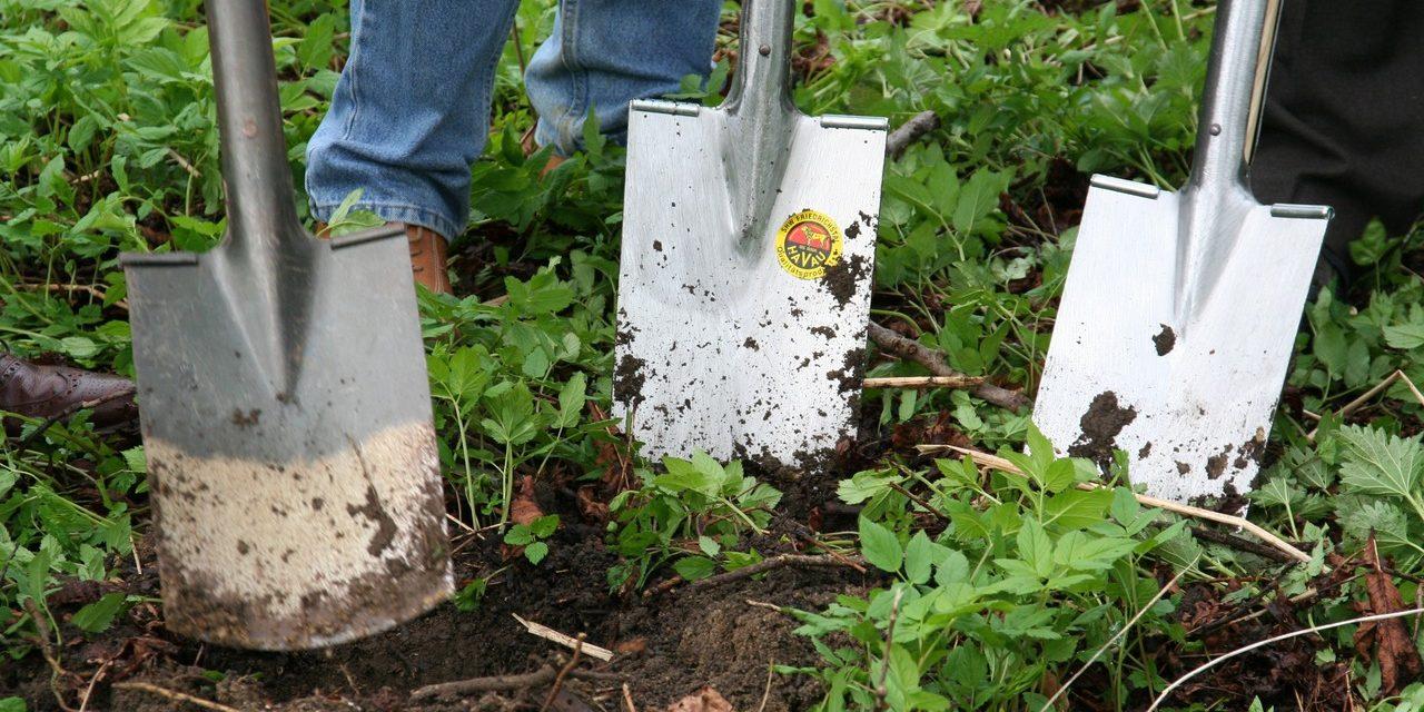 A fejedre nőtt a kert? Egy mobil app megoldja helyetted a gondot.