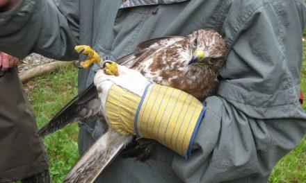 Sérült madarat akartak menteni az autópálya mellett, de nem mehettek fel matrica nélkül