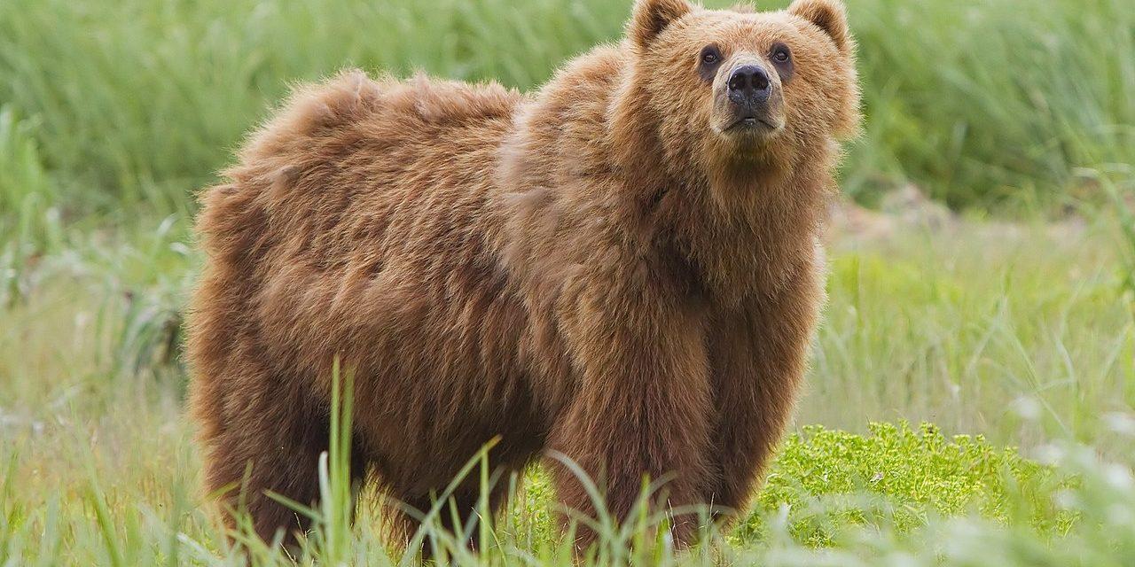 Ne szelfizz a medvével!