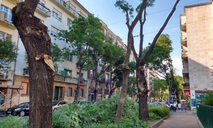 Leállították a Pozsonyi úti fák csonkítását