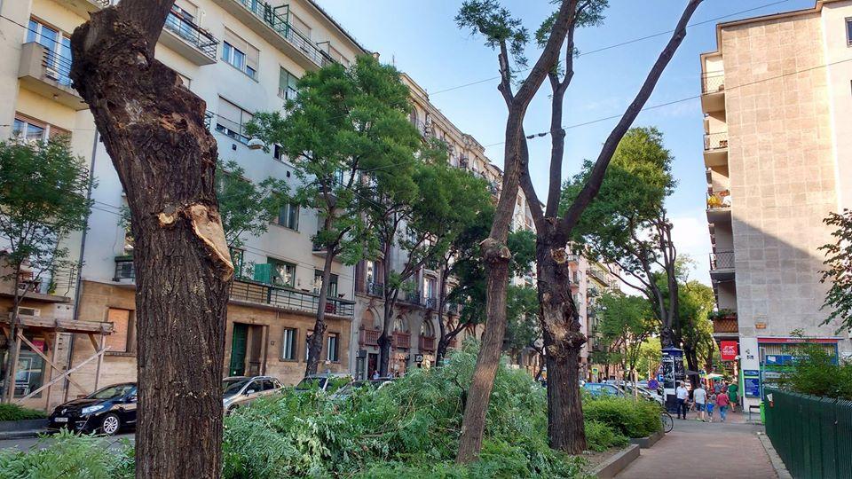 Tömegesen csonkolják a Pozsonyi úti fákat