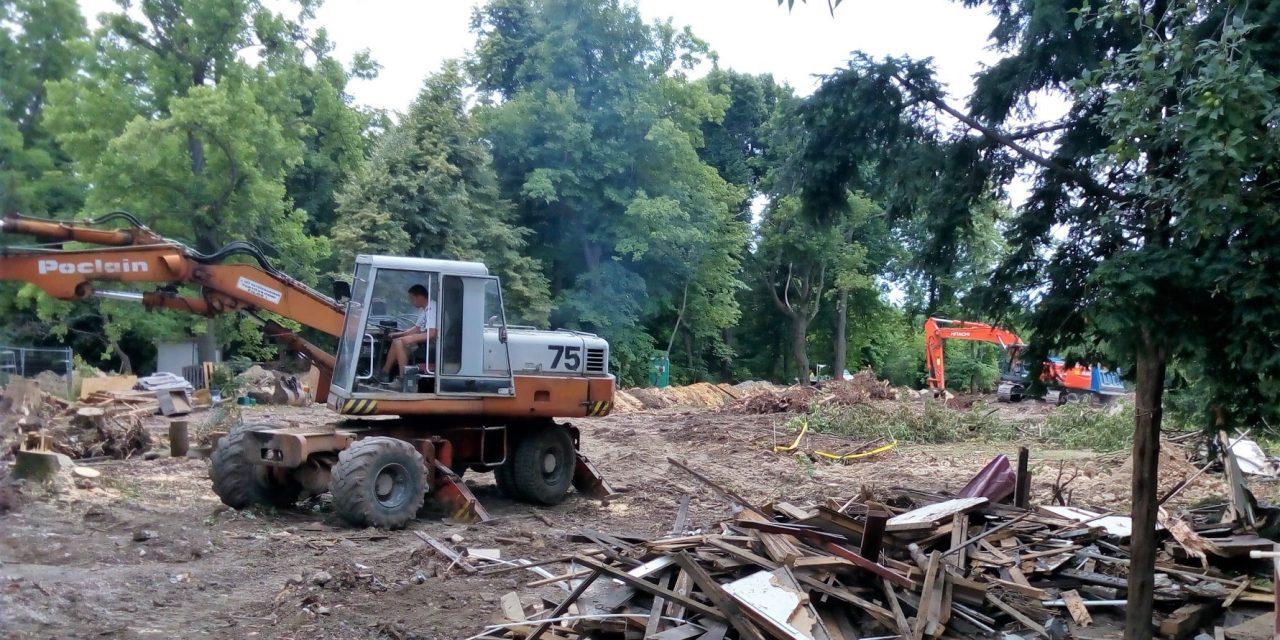 A XII. kerület alpolgármestere szerint csak invazív fafajokat vágnak ki Normafánál