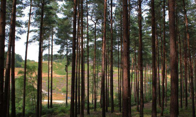Száz mese, egy erdő: a Bourne Wood