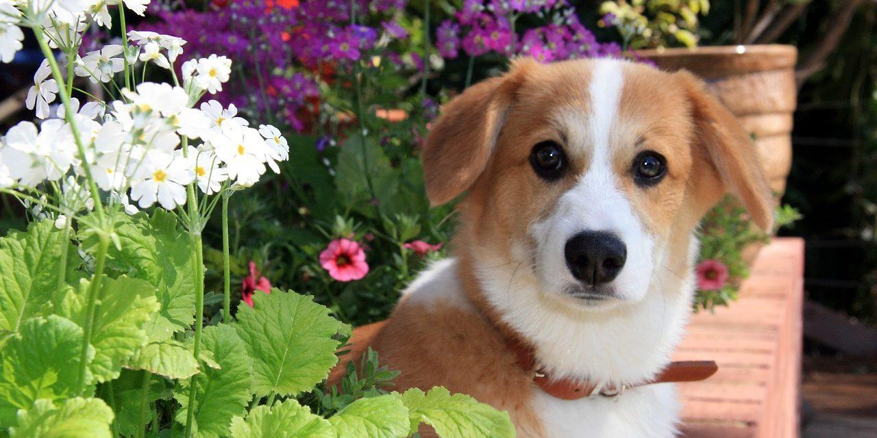 Kutyák tapossák szét a gellérthegyi virágágyásokat