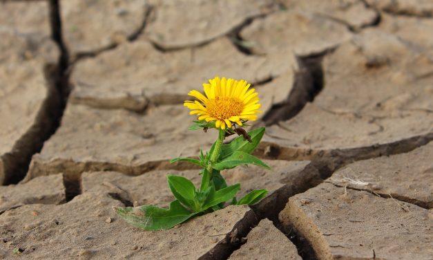 Ellenállóbb növényfajták létrehozásához épül klímaközpont Kaposváron