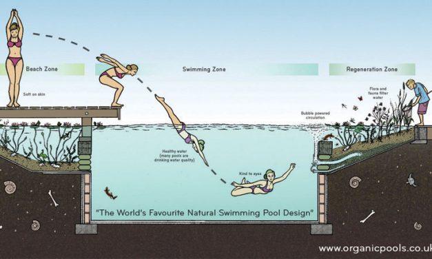 Hogyan készíthetünk saját kezűleg természetes úszómedencét?