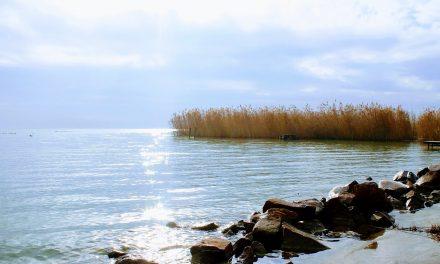 Jelentősen gyorsult a hínárosodás a Balatonban