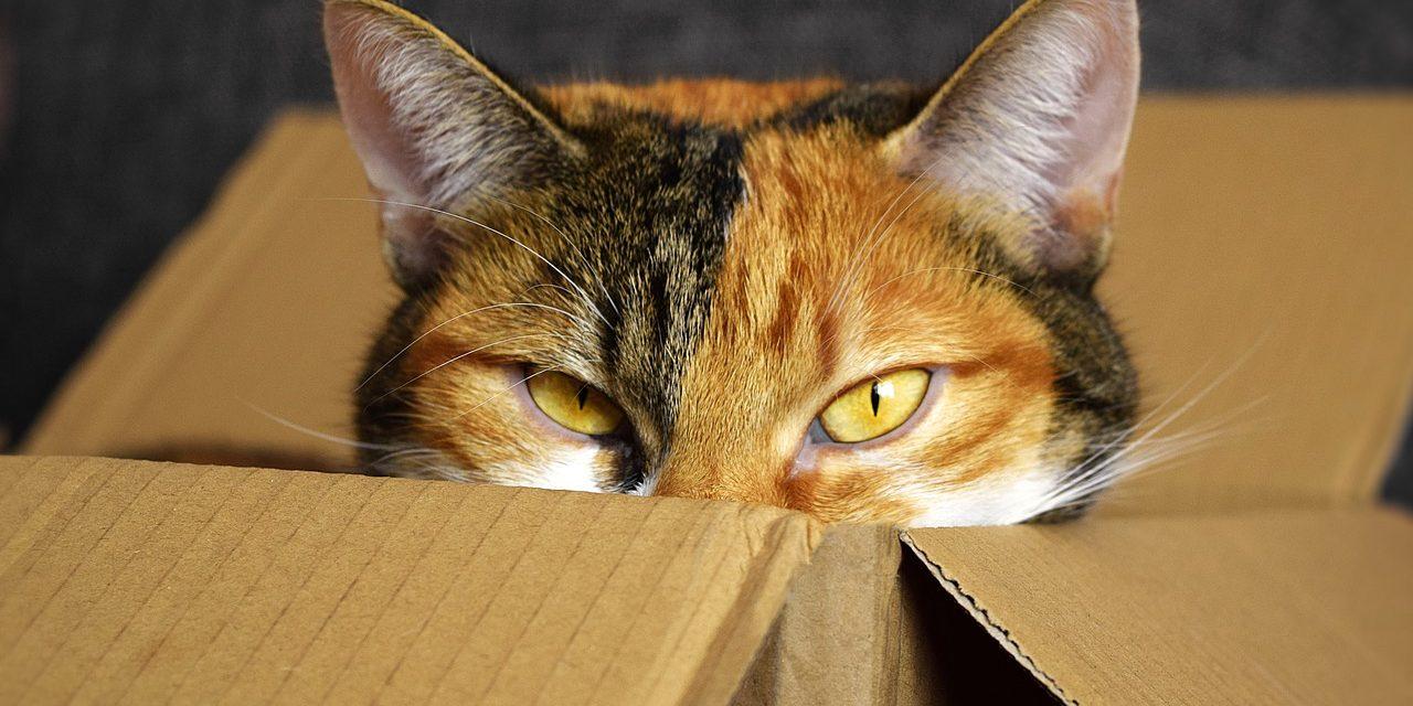 Minek kanapé a macskának, amikor úgyis a dobozba fekszik?