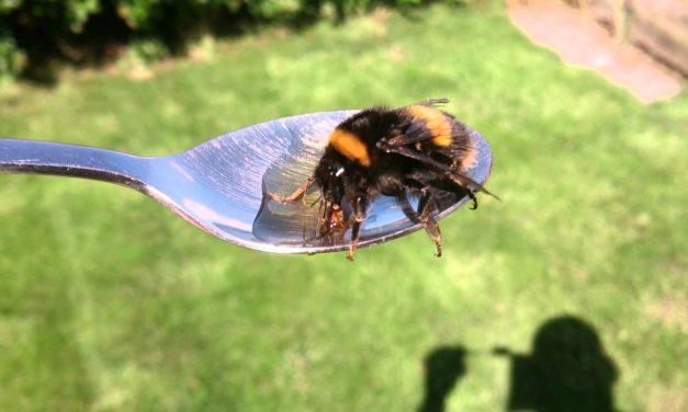 Sir David Attenborough módszerével méheket menthetünk könnyedén