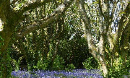 Mi van a fák alatt egy erdőkertben?