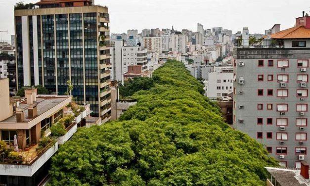 Plázaépítéstől kellett megvédeni a rózsafákat, a világ legszebb utcája maradt