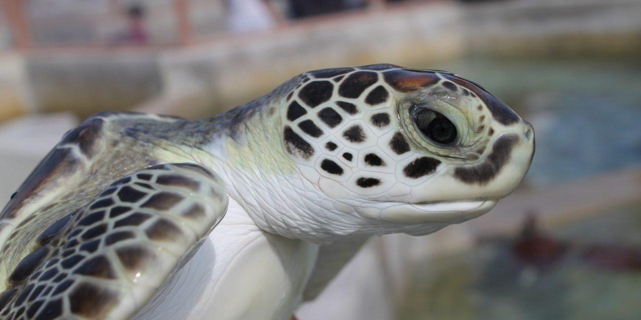 Megint meghalt egy teknős a rengeteg műanyag miatt