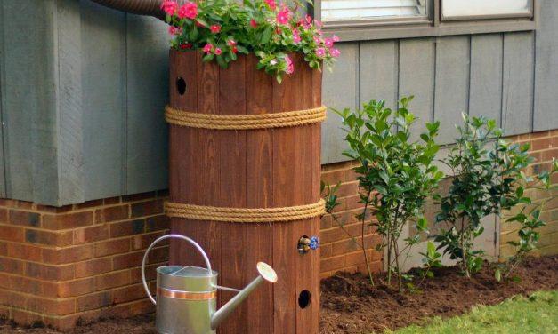 Így gyűjtheted össze a leghatékonyabban az esővizet