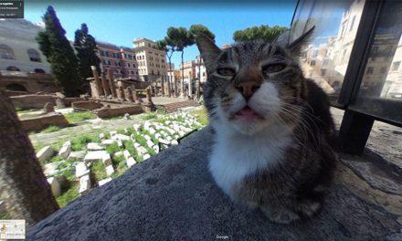 A Google maps-es macska, az internet új sztárja