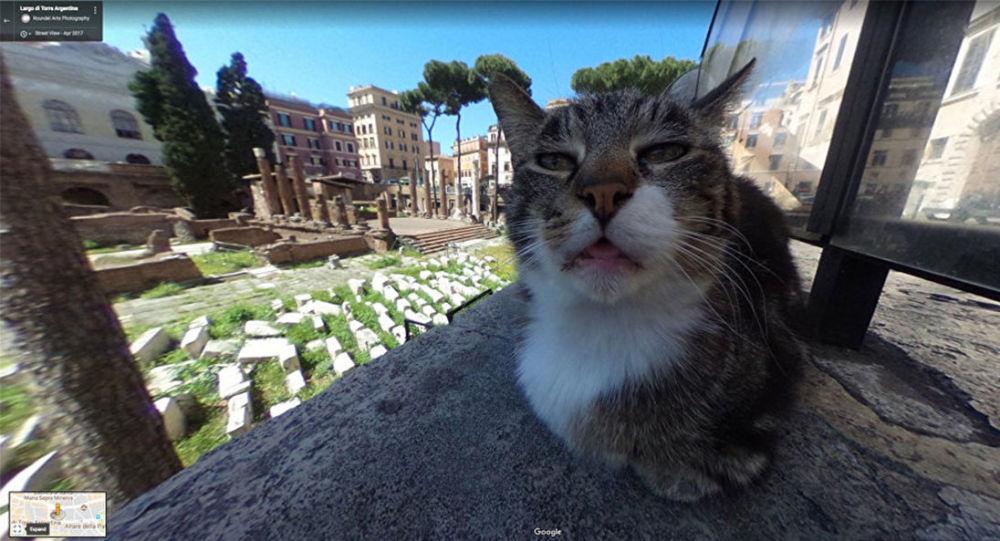 róma google térkép A Google maps es macska, az interúj sztárja | Gardenista
