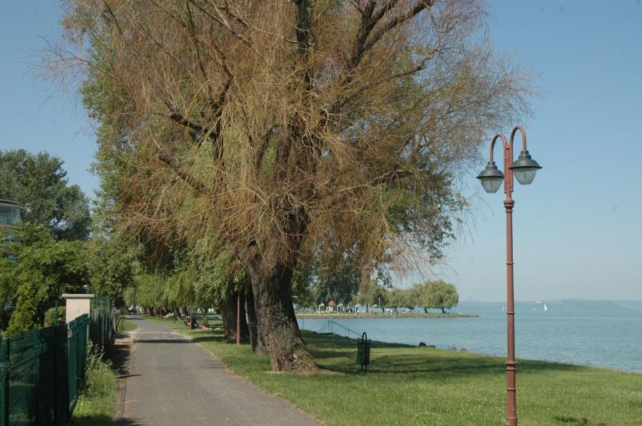 Siófoki körbevizelt fák – most tényleg?