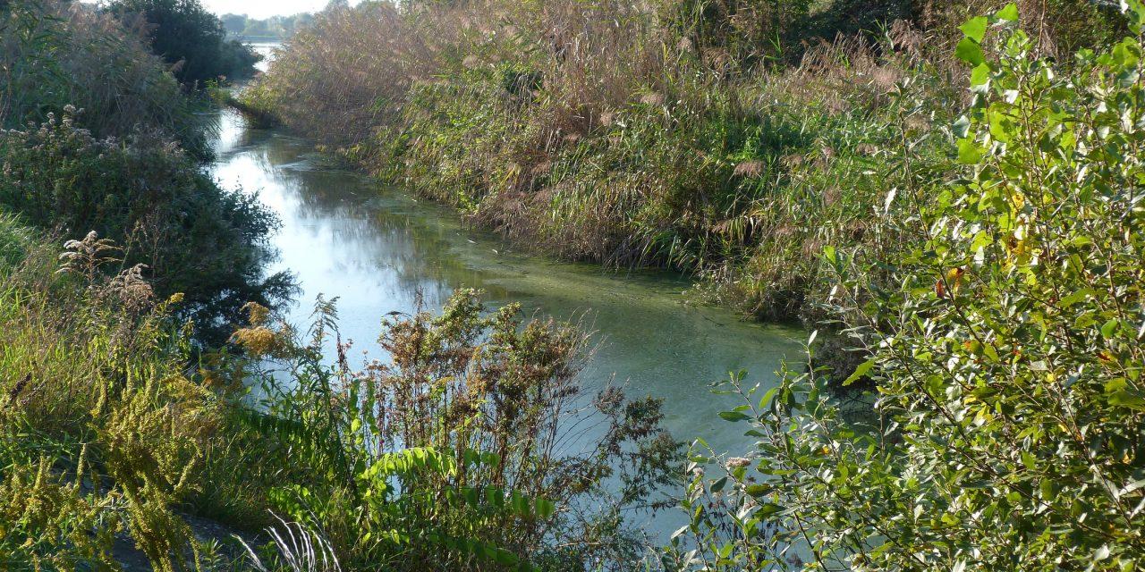 Dőlt a szennyvíz a Szilas-patakba