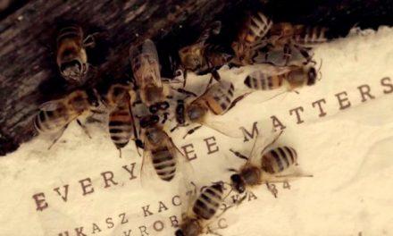 Végre van megoldás a méhek pusztulása ellen