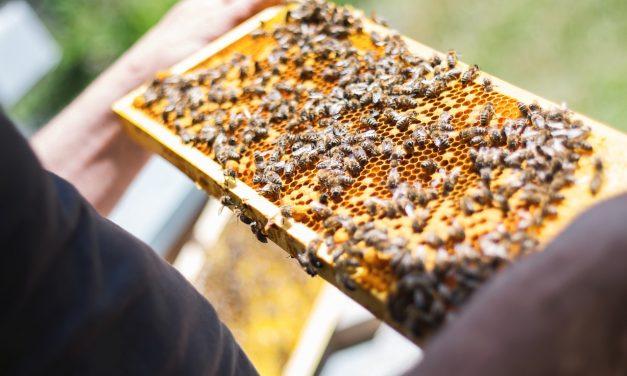 Tömegesen pusztulnak a méhek, vizsgálat indult az ügyben