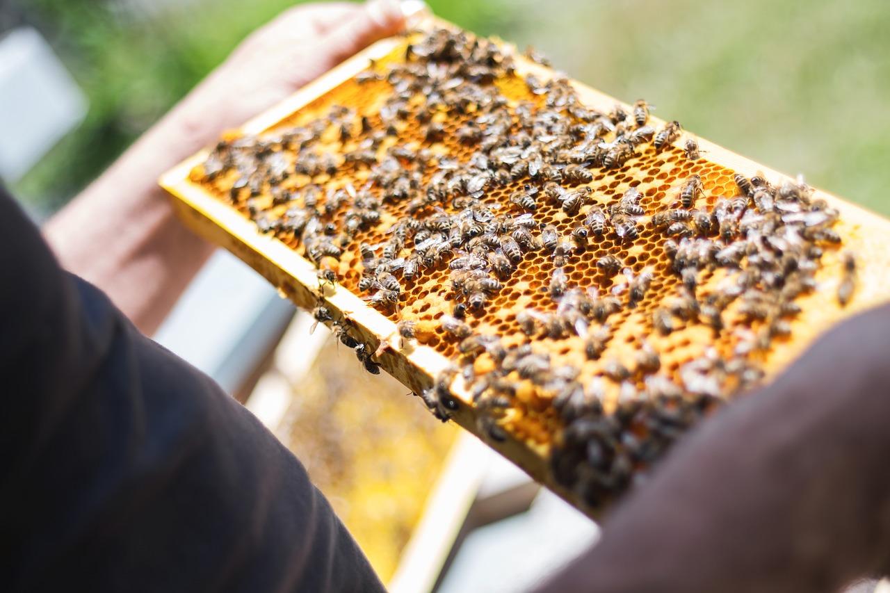 Hány szeme van a méheknek? Homlokzati és fényképészeti látás