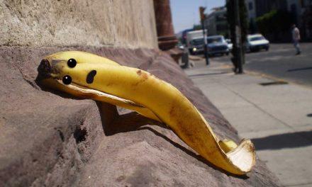 Kipusztulhat a banánfaj, amely a többi banánt mentheti meg a kipusztulástól