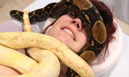 Az óriáskígyó masszázs hatása (a pánikon kívül)