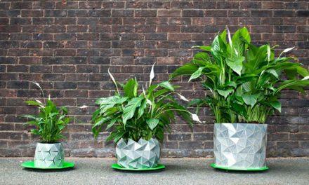 A kaspó, ami együtt nő a szobanövényeddel