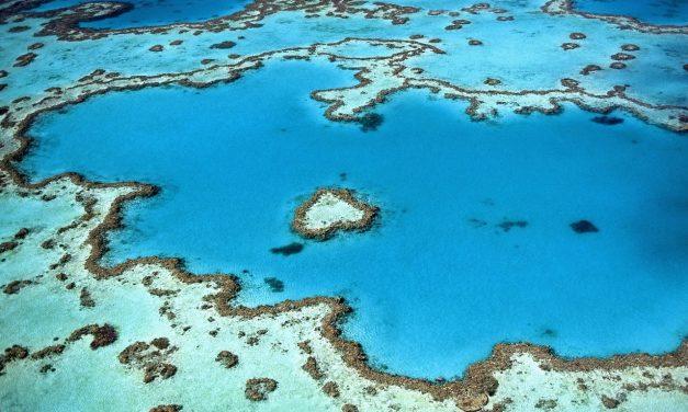 Mesterséges felhőkkel próbálják menteni a korallokat