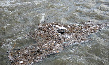 Hűtőszekrényeket is találtak a szemétszedők az Ipolyban